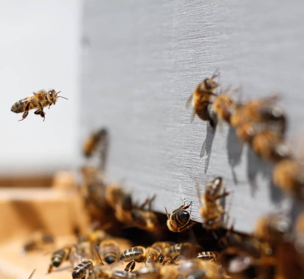 Web Design, Webdesigner, Swarming bee Web Design